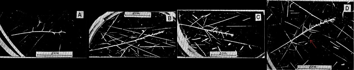 Image range velocity relation fission fragment in Hellium Boggild